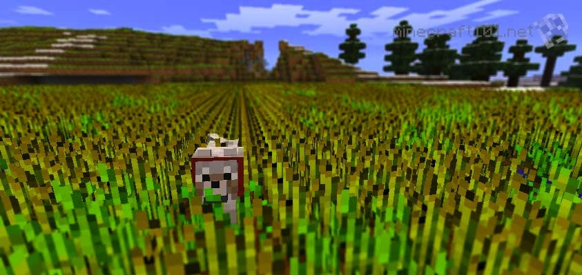 Minecraft Wheat Growing Crops | Minecr...