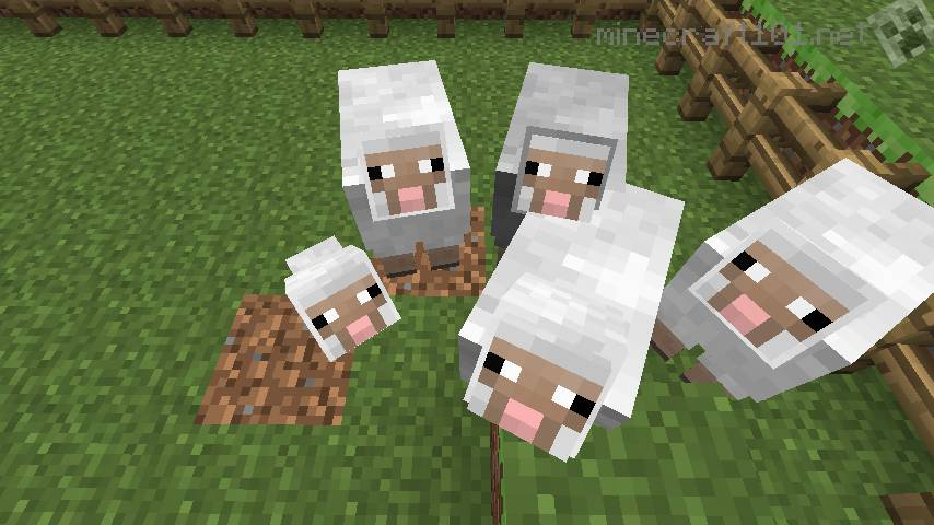 Image of: Animal Farm Squeeeee Its Minecraft Piglet Minecraft 101 Farming Sheep Cows And Pigs Minecraft 101