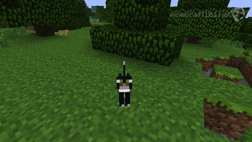 Minecraft How To Get Cats Off Chests