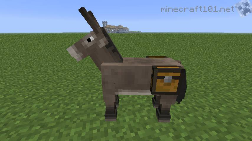 Donkey With Chest