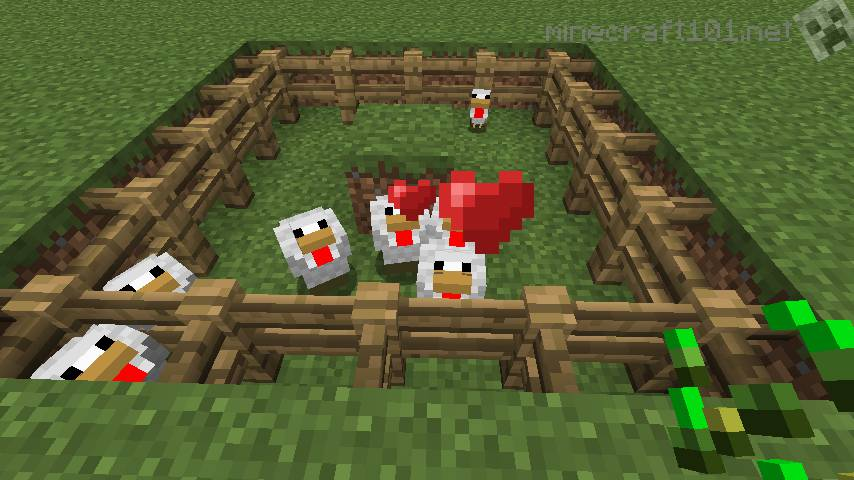how to lure chickens minecraft
